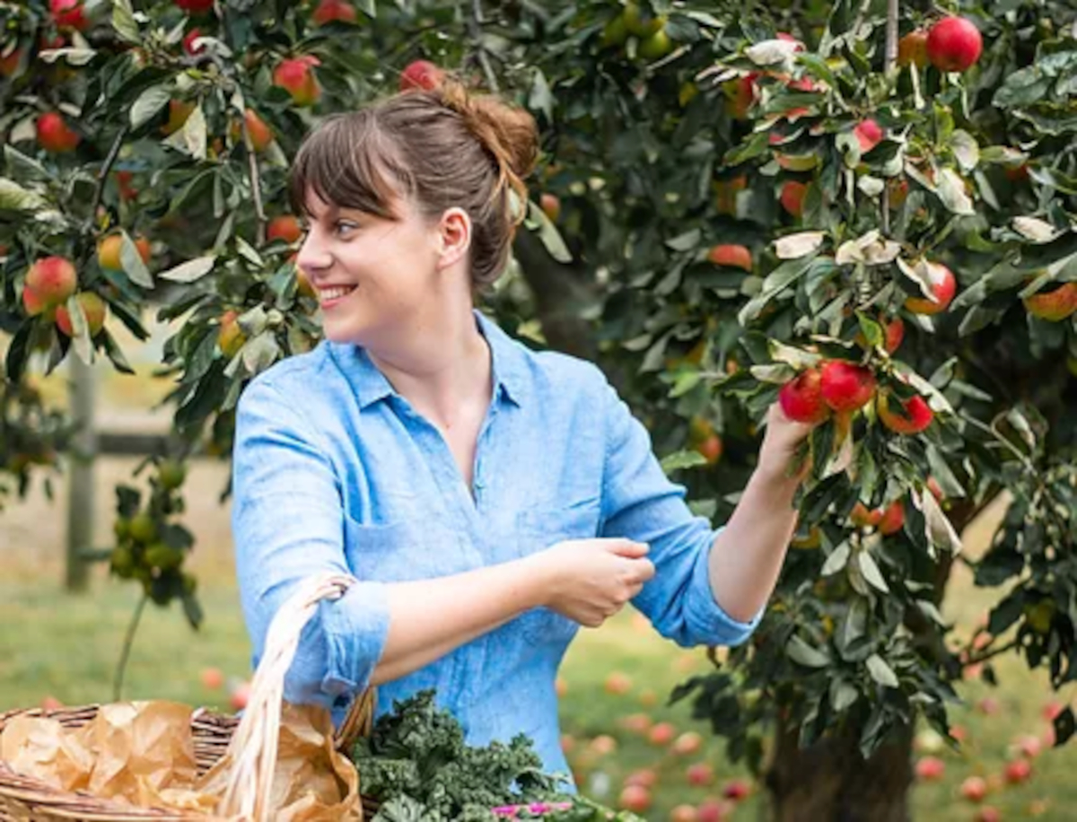 Bombus team member Amie, harvesting apples.