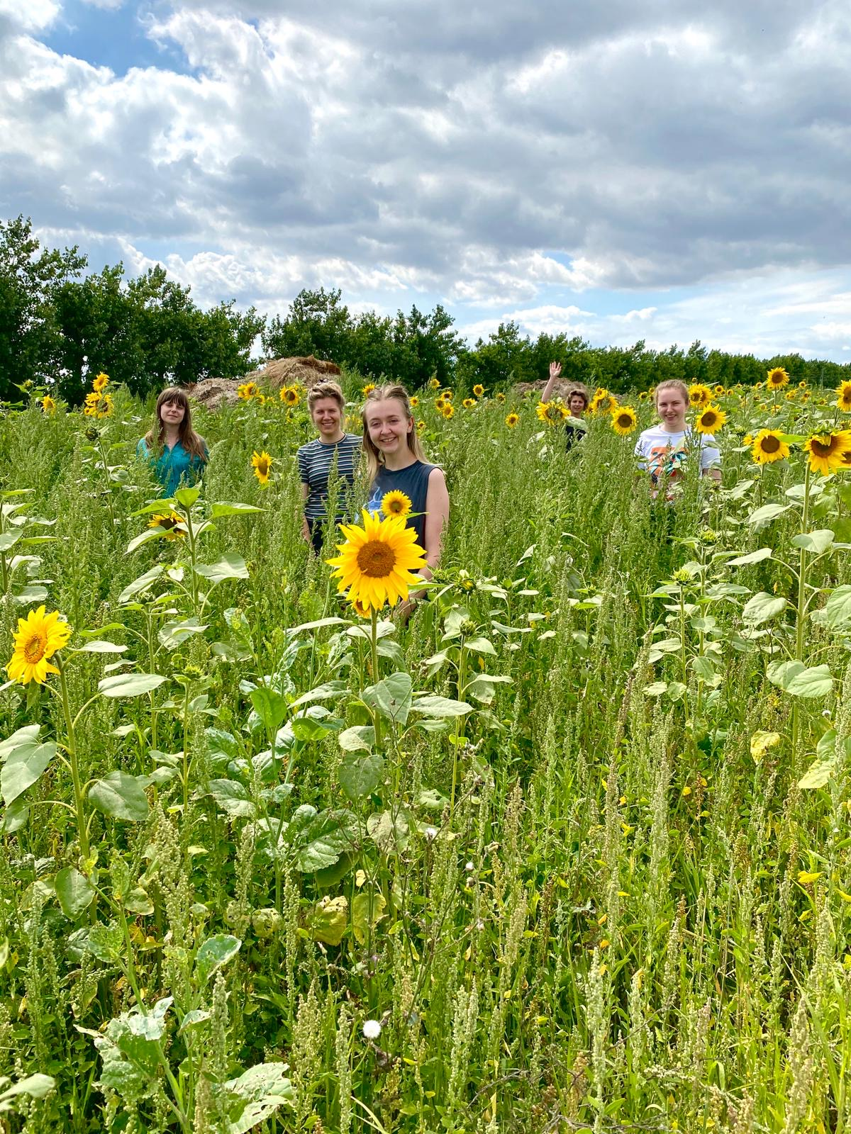 Bombus team in a field of sunflowers outside the Bombus studio
