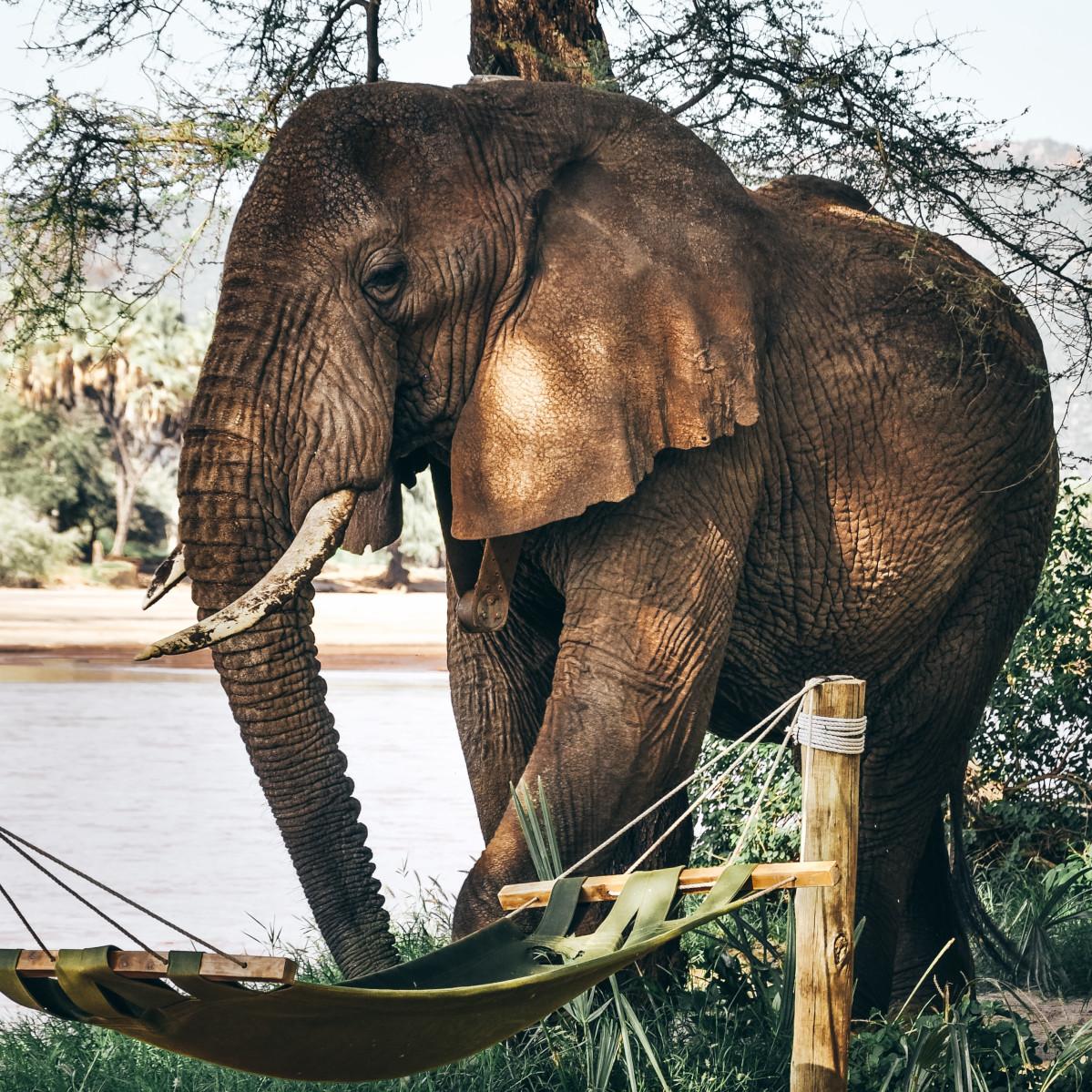 Adopt an Elephant Gift