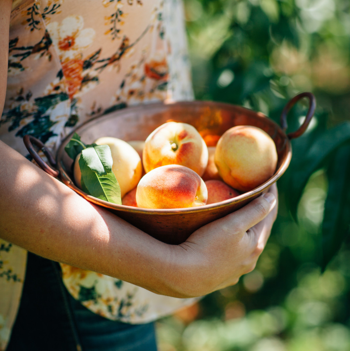Bowl of peaches. Pollinating a peach tree by hand is how we would have to pollinate our crops if we didn't save the bees!