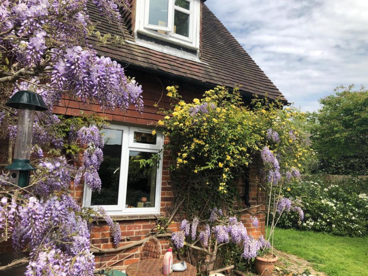 Garden at Nikki's Vicarage